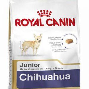 chihuahua-1.jpg