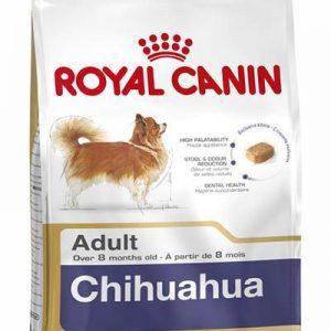 chihuahua-adult-1.jpg
