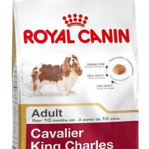 cavalier-adult-1.jpg