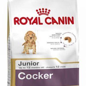 cocker-junior-1.jpg
